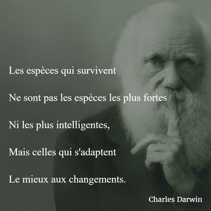 Les espèces qui survivent ne sont pas les espèces les plus fortes ni les plus intelligentes, mais celles qui s'adaptent le mieux aux changements. (Charles Darwin) #citation #coaching #changement