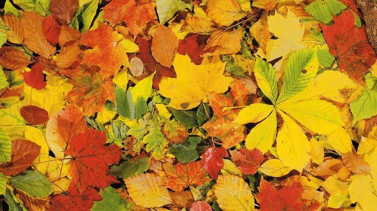 Besonders im Herbst kann der Laubbefall zu Nachbarschaftsstreit führen.