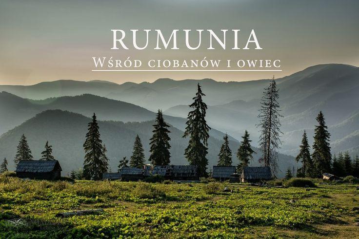 Wśród ciobanów i owiec (Góry Maramureskie, Rumunia)