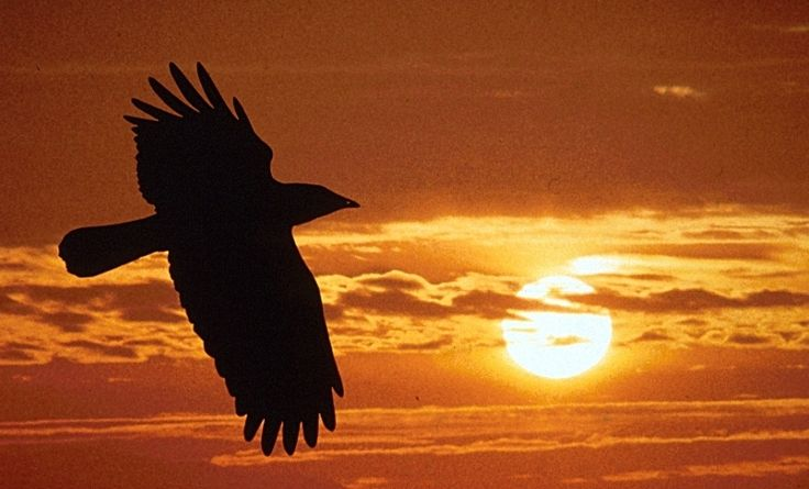 The symbolic meaning of the Raven  in Native American Indian lore describes the raven as a creature of metamorphosis, and symbolizes change/transformation.