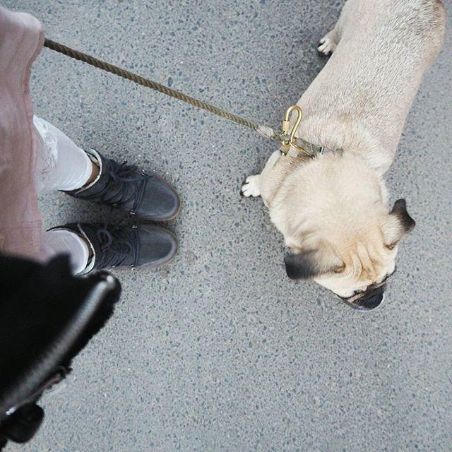 #happyfriday auf LIEBEWASIST.COM wartet heute ein besonderer Beitrag auf euch! Die liebe Kathi @meet_the_happy_girl und Lotte haben mir Rede und Antwort in einem Interview gestellt 🐕 Unbedingt reinschauen! 🐾    Den perfekten Look zum Dog-Walk gibt's hier: http://liketk.it/2tS3Z [Affiliate]  ➡ @liketoknow.it App downloaden, Foto liken und screenshotten oder direkt nach 'liebewasist' in suchen und nschshoppen! #liketkit