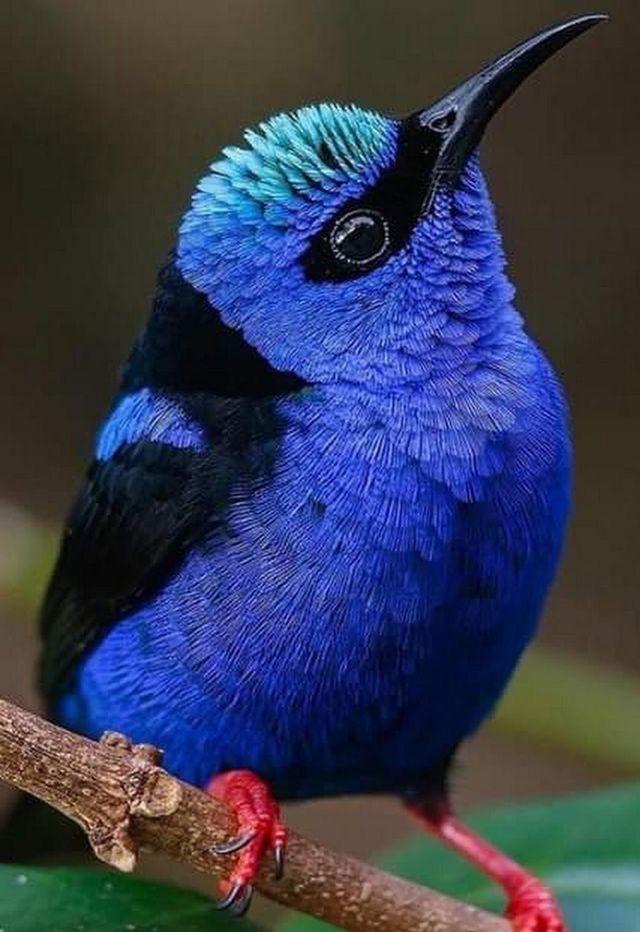 узнал название и картинки птиц самых красивых птиц артистки есть
