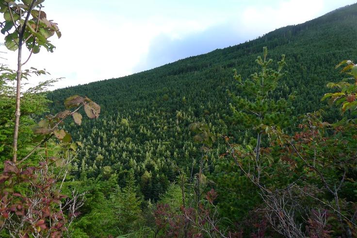 2012 autumn  mt.asama