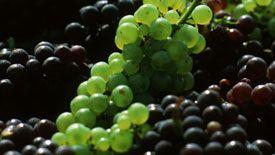 Comité Champagne Comité Interprofessionnel du vin de Champagne Site officiel du Champagne
