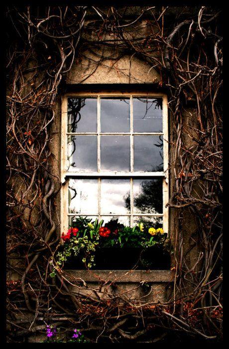 55 best Grapevine Art images on Pinterest   Gardening ...