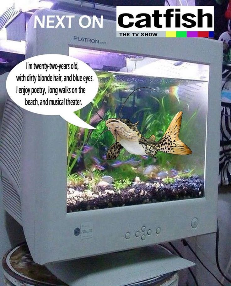 1000 images about catch a catfish on pinterest white for Cat fish mtv