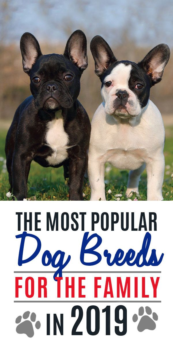Most Popular Dog Breeds That Every Family Wants In 2019 Family