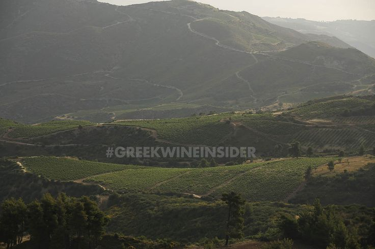 Vineyards on the foothills of Mt.Helmos, Peloponnese, Greece