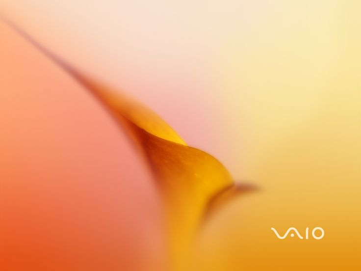 yellow plants and sony vaio 4 wallpaper - In the misty pink and yellow area there is a orange stem-like thing which has two connected oval p... yellow plants and sony vaio 4 wallpaper - In the misty pink and yellow area there is a orange stem-like thing which has two connected oval p...