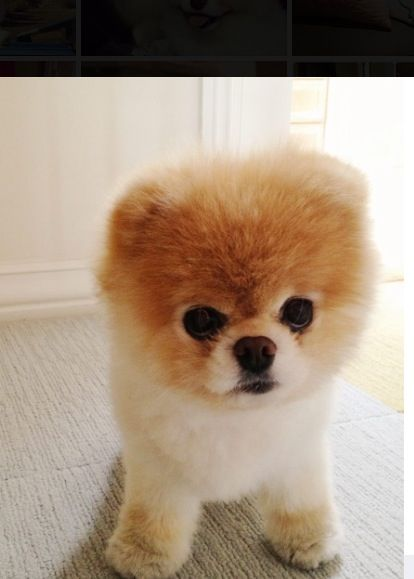 17 Best Dogs That Look Like Other Animals Images On