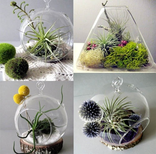 epiphyte terrariums from Sweet Peach