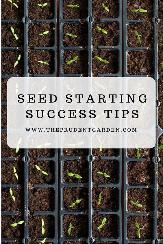 Get the most success out of seed starting efforts. Following these tips will help ensure a robust start to your garden project.