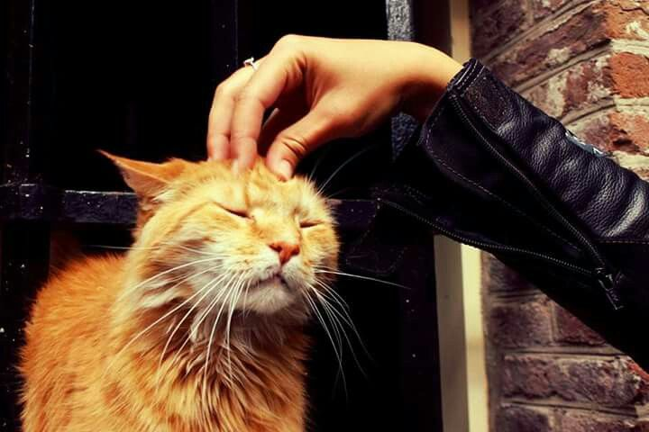The most friendly cat in Amsterdam :)