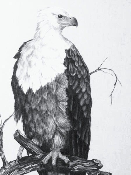 My Eagle,