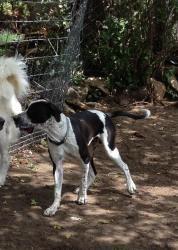 Adopt Rocky On Great Dane Dogs Dane Dog Dogs