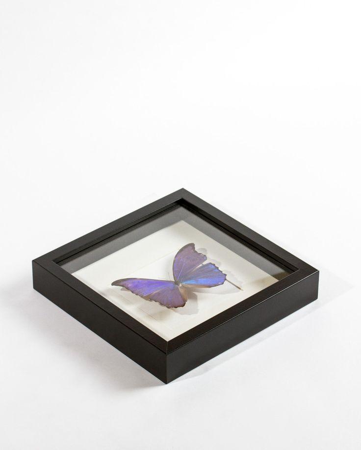 Kader met blauwe morpho vlinder