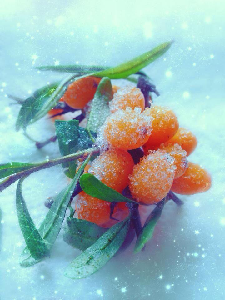 Frozen berries, iPhone, art