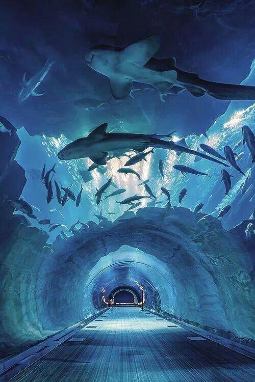 Dubai's Aquarium Tunnion