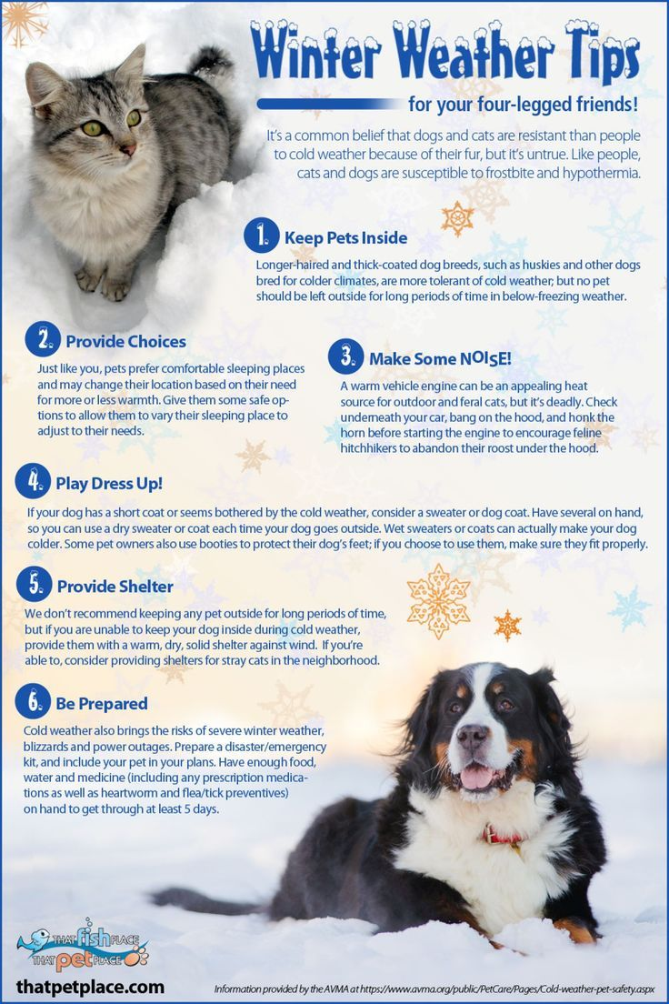 Winter Weather Pet Safety Tips Pet Safety Pet Life Pets