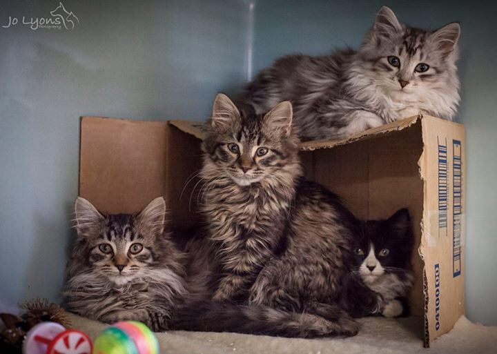 Another bunch of adorable kittens... the little guy on the top of the box got adopted today, the other three are all looking for their forever homes \u003C3
