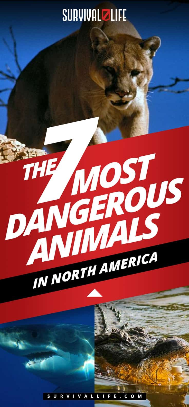 Most Dangerous Animals In North America