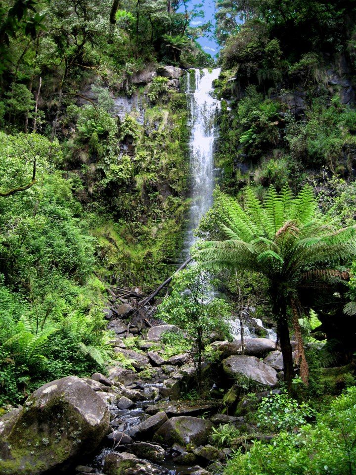 hiking to #Erskine Falls, Lorne, Victoria, Australia - Planning a trip to Lorne for camping this June!