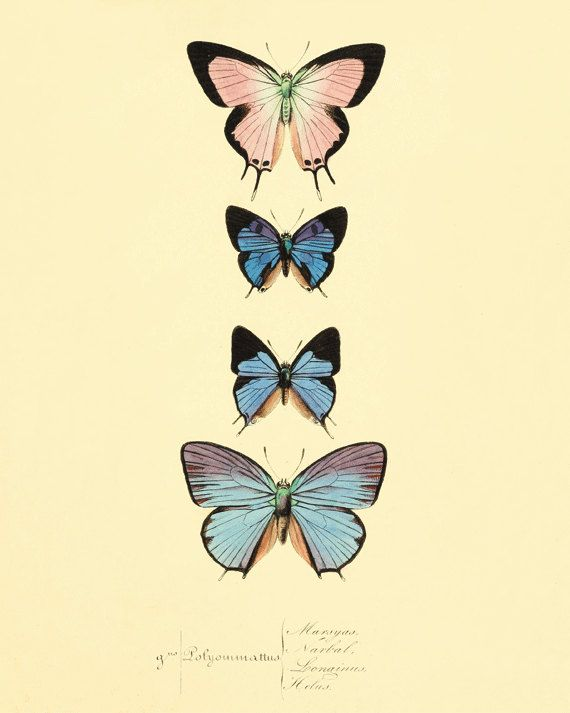 Butterfly blue Butterfly print Garden art by VictorianWallArt, $10.00