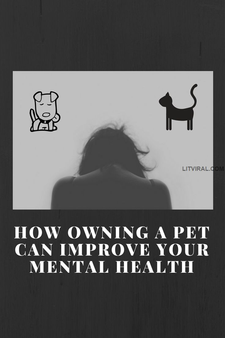 How Owning A Pet Can Improve Your Mental Health | LitViral.com