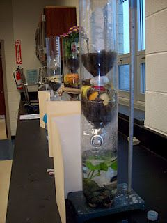 Building an Eco-Column  Grow plants and watch animals thrive in a mini ecosystem! The eco-column demonstrates how the natural filtering system works in an ecosystem, life science experiment. Visit bottle biology for a list of plants, animals, and activities for your mini ecosystem.