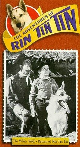 The Adventures of Rin Tin Tin (1954-1959) Rusty was orphaned in an Indian raid. He and his dog Rin Tin Tin were adopted by the troops at Fort Apache in Arizona, and helped establish law & order around Mesa Grande.