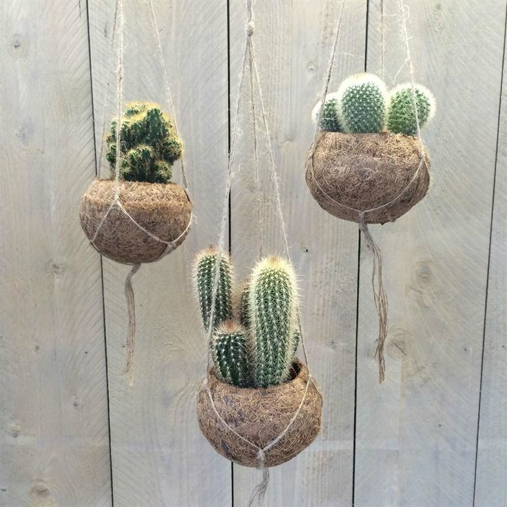 Estremamente Oltre 25 fantastiche idee su Vasi da appendere su Pinterest  PZ52