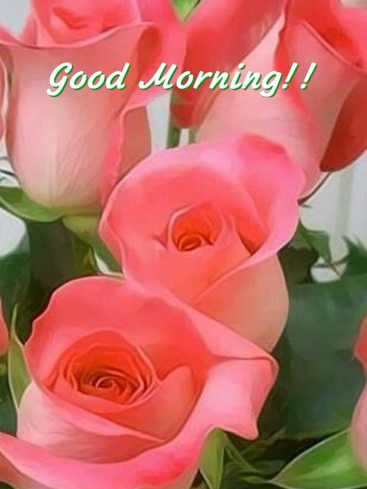 3956 best good morning images on pinterest morning - Good morning rose image ...