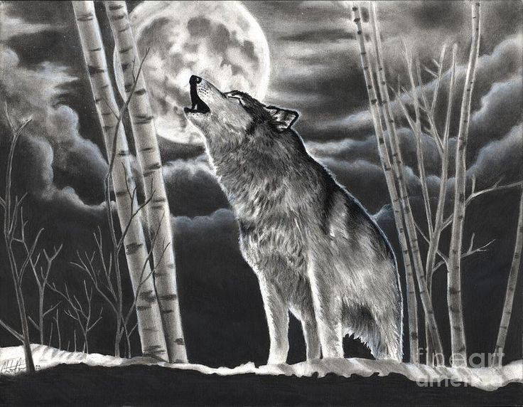 realistic charcoal drawings wolf howling at the moon drawing