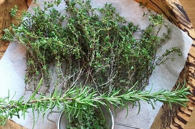 16 Plantas para sembrar y cocinar en casa