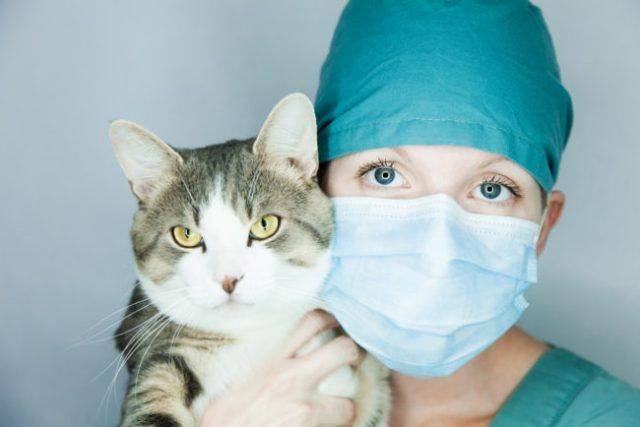 Pin On Cats Health Behavior And Lifestyle