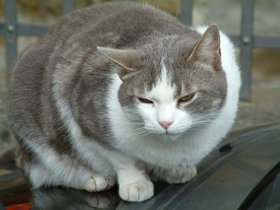 Cat constipation: there is your cat scratching and straining continuously, when you finally come to the conclusion that your kitty must be constipated.