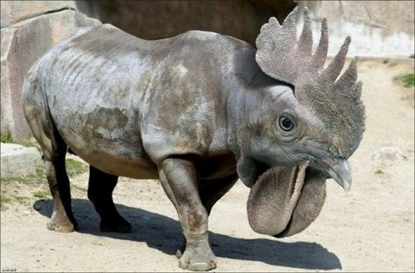 There is another rhino combination