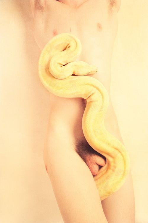 Albino (Milky),  2012