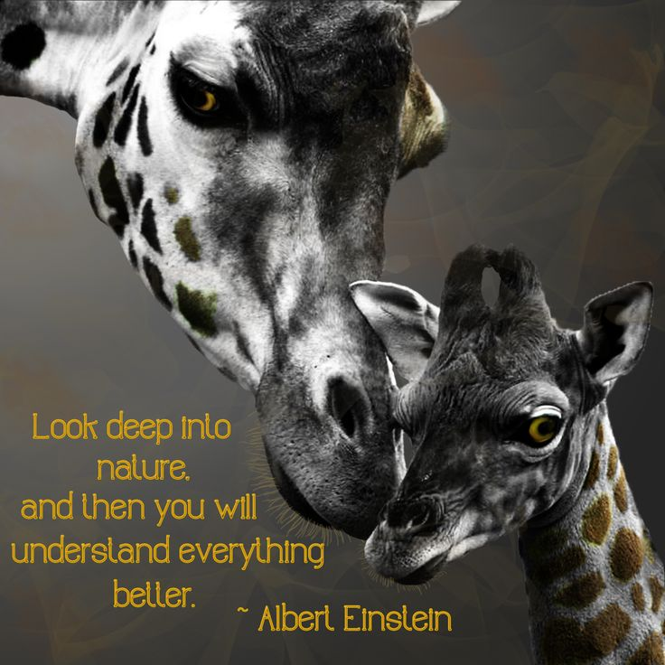 Photo Manipulation - Quotes | My Creations | Quotes ...