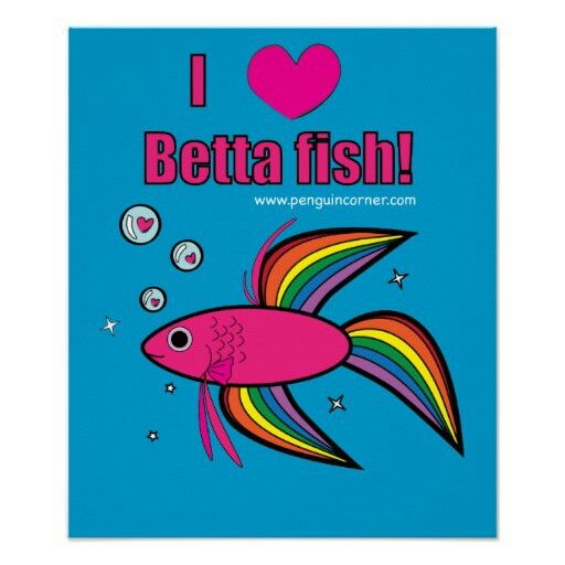 Me too betta fish pinterest betta fish and betta for What kind of fish can live with a betta