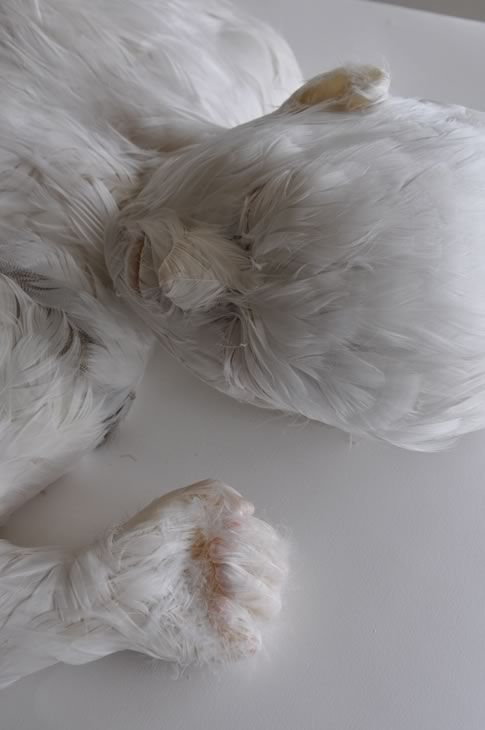 Feather Child 4, Lucy Glendinning