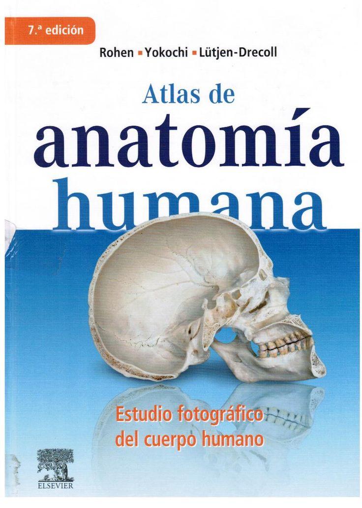 Rohen J, Yokochi E, Lutjen-Drecoll E. Atlas de Anatomía humana: estudio fotográfico del cuerpo humano. 7a. ed.  Madrid: Elsevier; 2011.