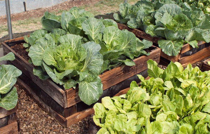 How to make a raised vegie garden
