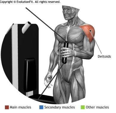 SHOULDERS - EXT ROTATION CABLE MACHINE