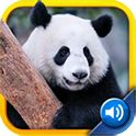 My First Zoo: Sight & Sounds- This is a truly portable zoo. It includes 60 remarkable images of animals of all types meaning hours of fun and learning for toddlers and small children. It's the evolution of the animal picture book! Tap the image to hear the animal sound played back. Tap the name of the animal to hear a voiceover of the name. This allows children to associate images, forms and sounds, as well as practice fine motor skills while building their early vocabulary.