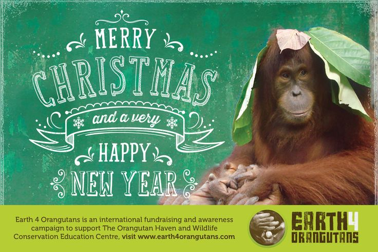 SOCP Xmas cards http://www.redbubble.com/people/rawildlife/works/11123354-earth-4-orangutans-christmas-card