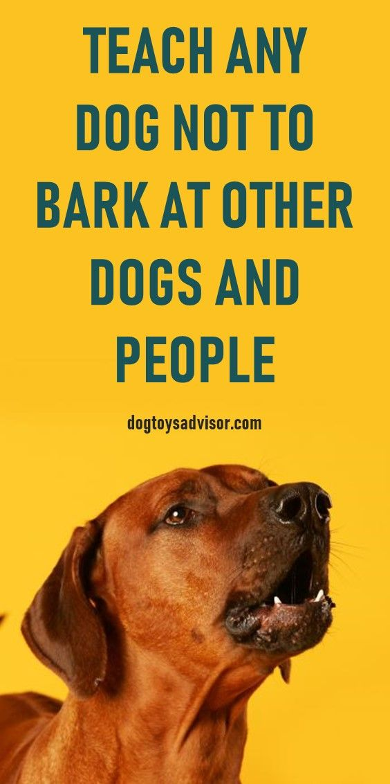 Learn How To Stop A Dog From Barking At Other Dogs And People In 3