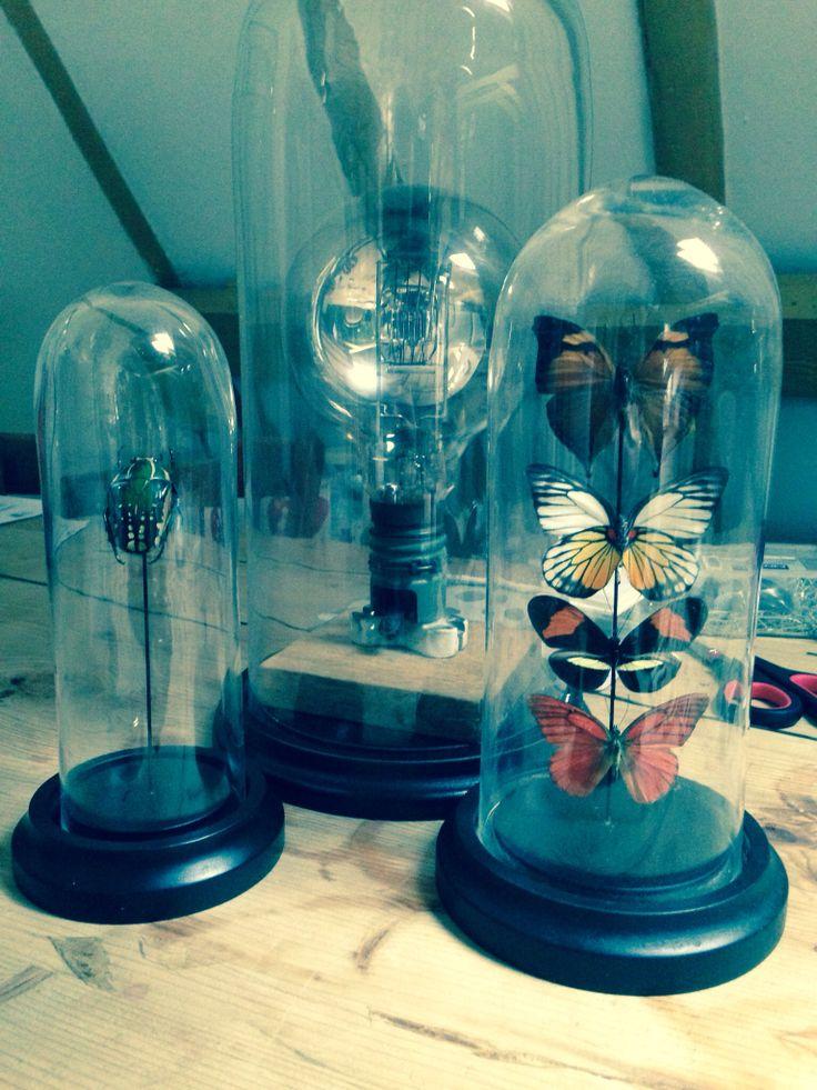 My butterflies in glass