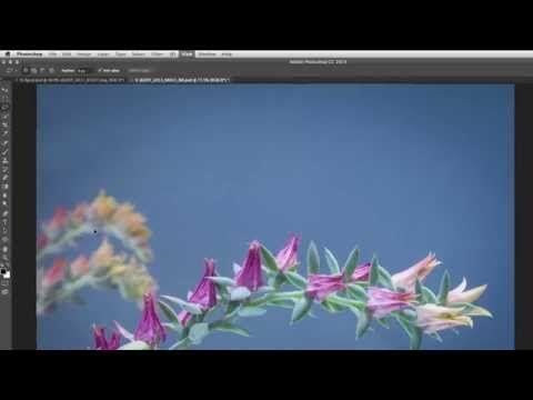 Photoshop Tutorials by Julieanne Kost