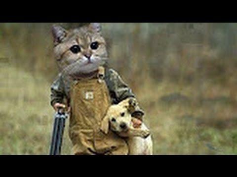 Pisici Amuzante ✔ Faze Comice cu Pisici 2017 # 2 Funny Cats -  #animals #animal #pet #cat #cats #cute #pets #animales #tagsforlikes #catlover #funnycats Pisici Amuzante Faze Comice cu Pisici Faze tari cu pisici Funny cats Pisici amuzante  - #Cats